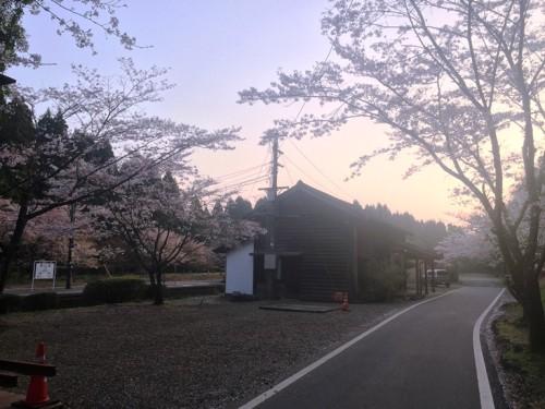 大畑駅 桜の季節 (1)