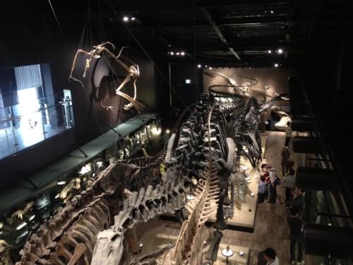 御船町 恐竜博物館2